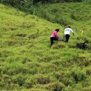 Ecuatea Guayusa Planting2
