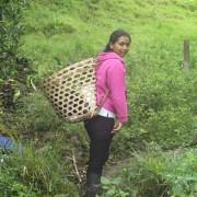 Ecuatea Guayusa Planting6